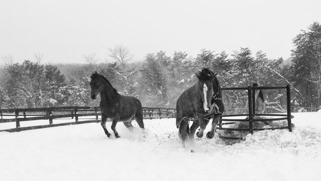 Winter Horse Blankets >> To Blanket, or Not to Blanket…That is the Question ...